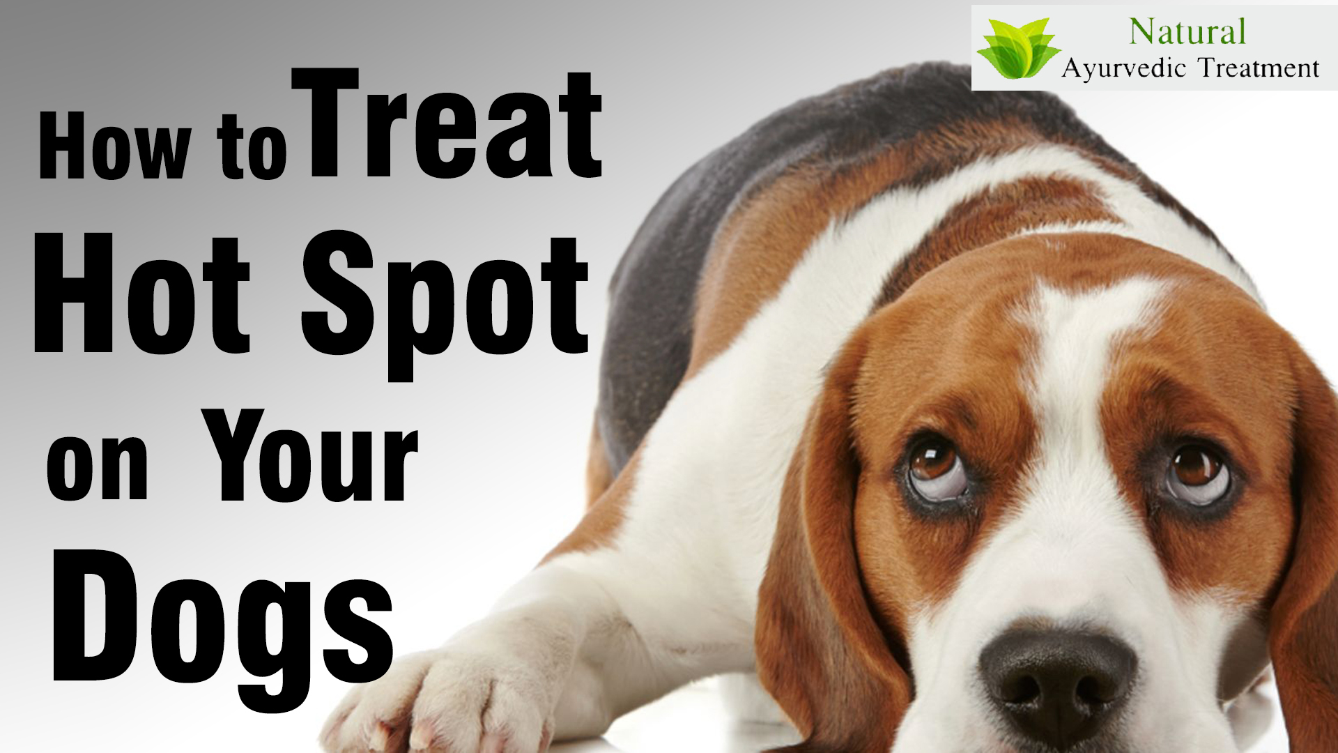 How to Treat Hot Spots on Your Dogs