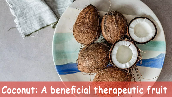 Coconut: A beneficial therapeutic fruit
