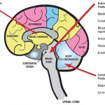 Multiple System Atrophy (MSA)